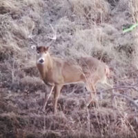Destination Whitetail: Bucks of the Black Water